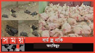 প্রতিদিনই মারা পড়ছে পাখি, ধস নেমেছে পোল্ট্রি ব্যবসায় | India News | Somoy TV