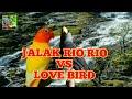 Jalak Rio Rio Vs Love Bird Mastereran   Mp3 - Mp4 Download