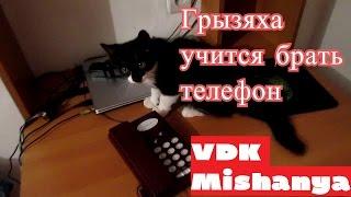 Кошка Пушинка младшая учится брать телефонную трубку