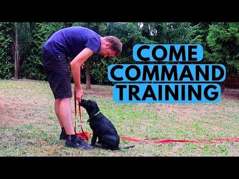 How to Teach a Puppy COME When Called Command