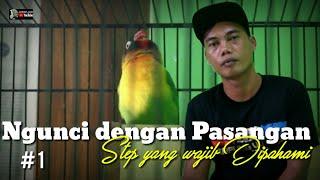 Download lagu PART 1 : STEP AGAR LOVEBIRD NGUNCI DENGAN PASANGAN