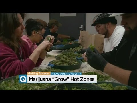 Commercial Marijuana Growers Buying Up Space In Sacramento At Unprecedented Rate