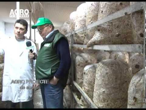 REPORTAJ VIDEO - Cultivarea ciupercilor