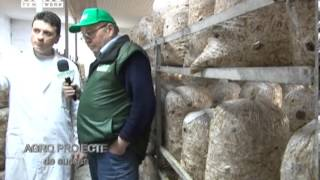 REPORTAJ VIDEO - Cultivarea ciupercilor