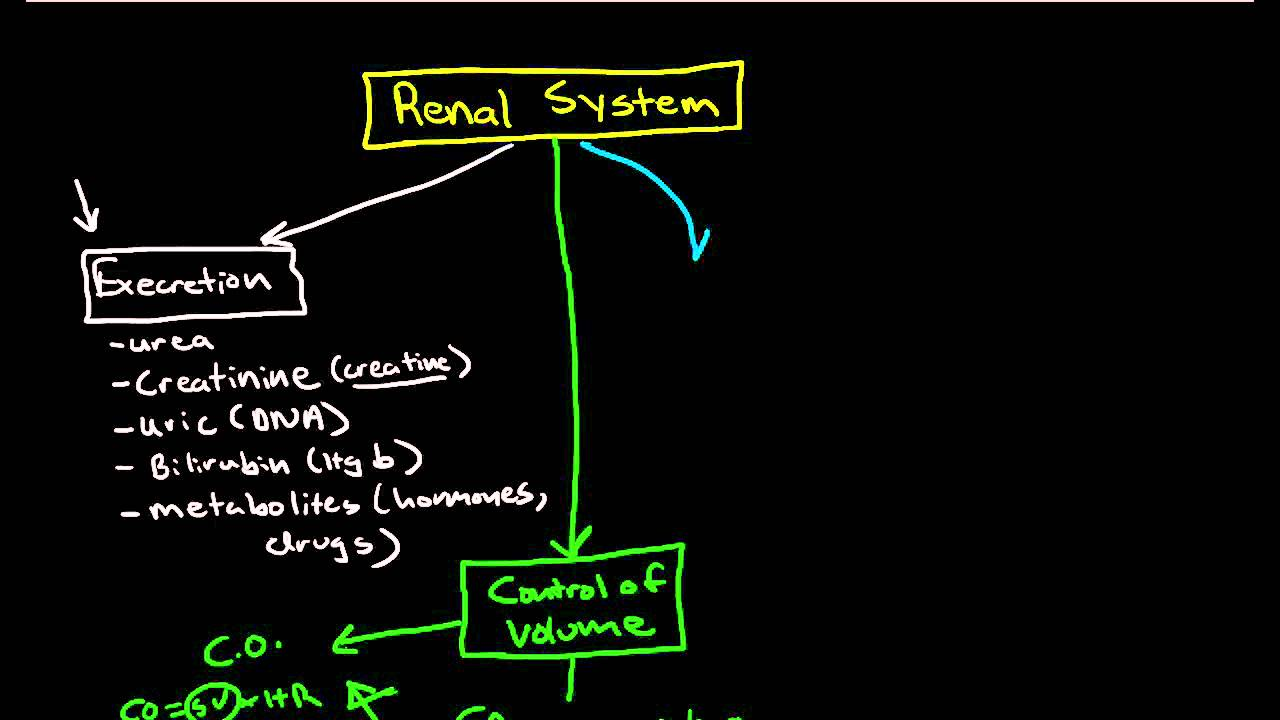 Physiology of the Renal System: Introduction