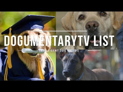 dogumentarytv's-list-of-intelligent-dog-breeds