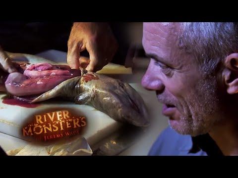 Looking Inside A Longfin Eel | EEL | River Monsters