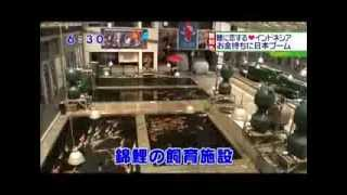 Koi Hunters Indonesia on Chukyo TV in Japan 2013.