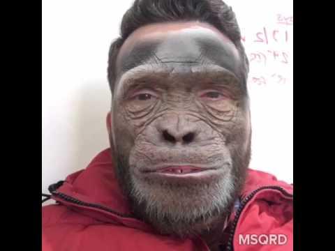Tipton Monkey