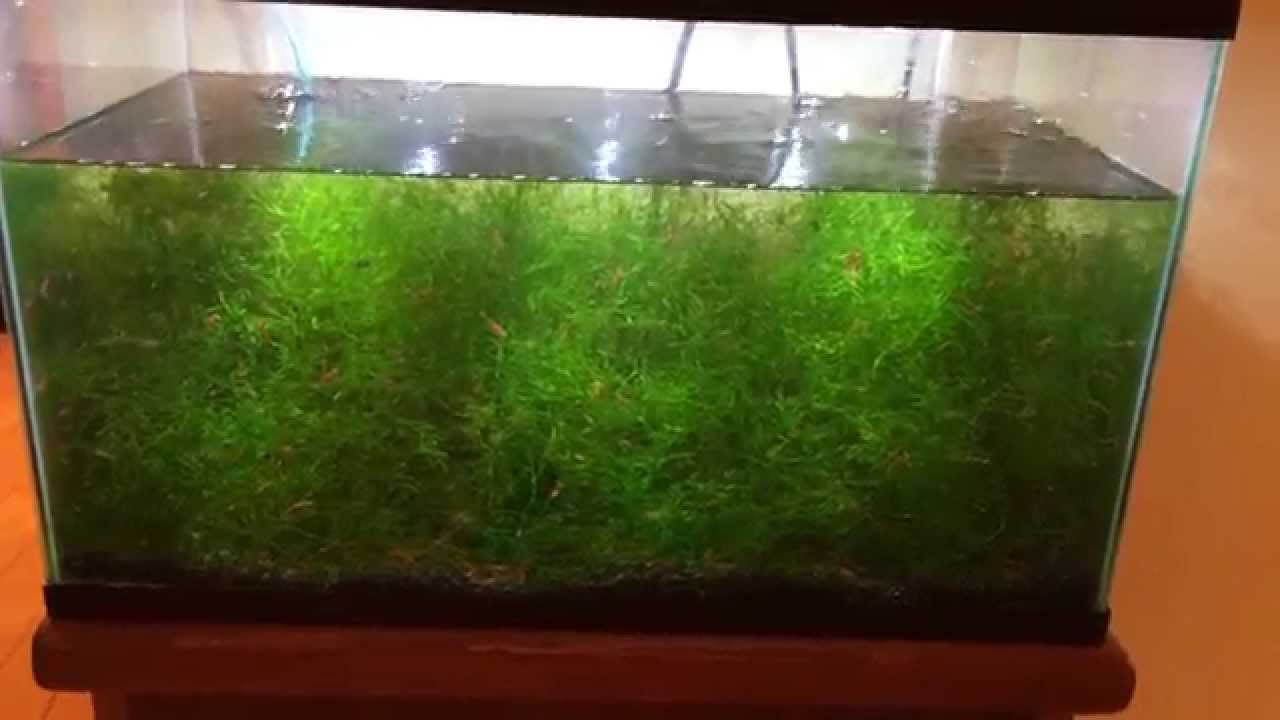 How to get moss to grow - How To Get Moss To Grow 16