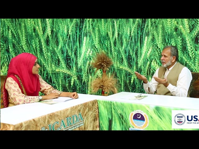 Wheat Production Plan part 4 (Diseases and Harvesting)