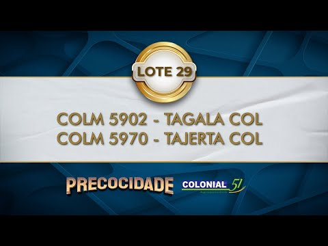 LOTE 29   COLM 5902, COLM 5970