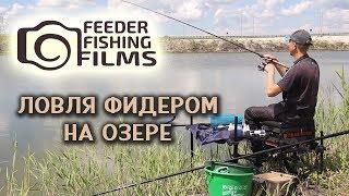 feeder at the lake ловля фидером на озере