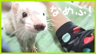 いたちラボ関連URL http://ferret-lab.twitachi.link/ https://twitter....