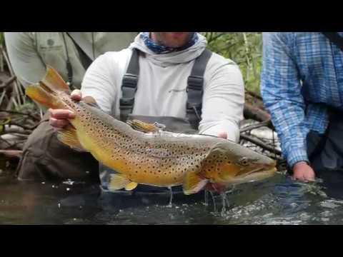 Fly Fishing Wyoming: Green Drake Hatch