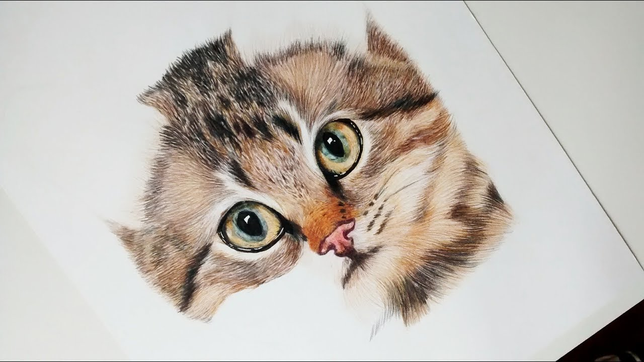 Como Dibujar Y Pintar Un Gato Realista How To Draw And Paint A