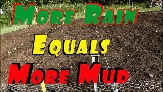 More Rain Equals Lots More Mud, Serious Setbacks This Year #97 Heirloom Organic Vegetable Garden
