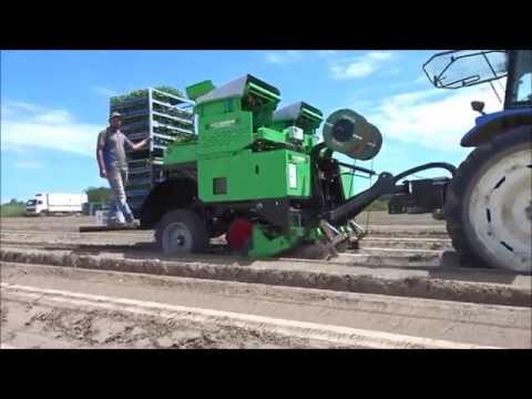 Agriplanter automatic transplanter sweet potatoes