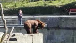 Wo sind all die Gäste vom BärenPark?