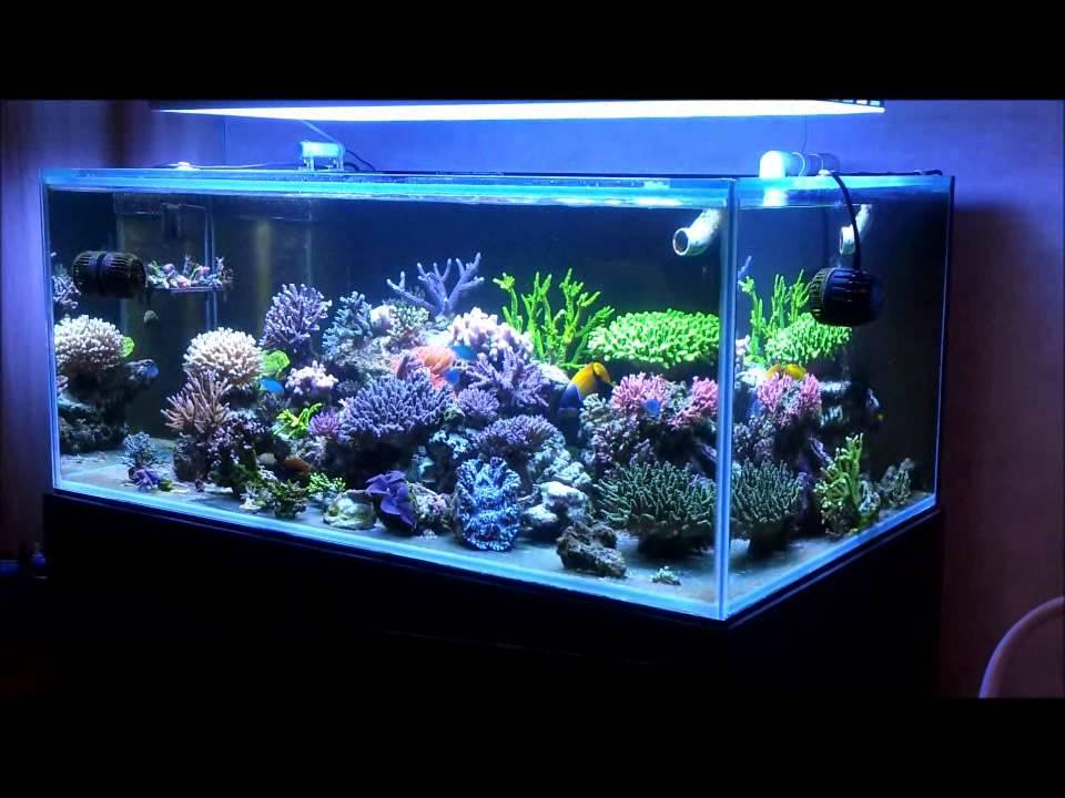 My Sps Reef Tank Youtube