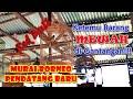 Murai Borneo Pendatang Baru Burung Mewah Ketemu Digantangan Pinggiran  Mp3 - Mp4 Download