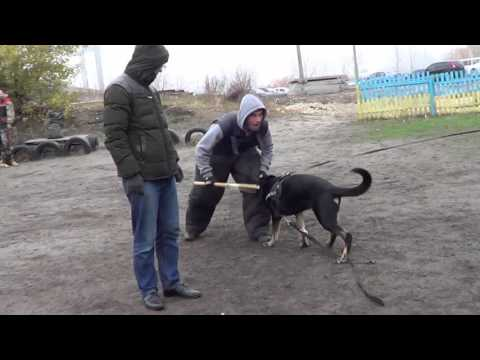 Работа в Киеве и Украине