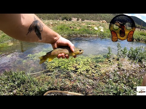 WILD Brown Trout Fishing In New Mexico (Productive)