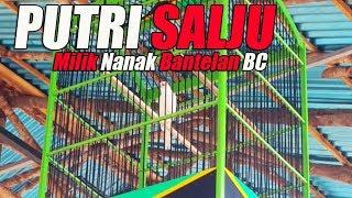 Aksi Kenari Lokal Juara PUTRI SALJU Milik Nanak Bantelan BC Di 1St Anniversary Juri SingBeBas