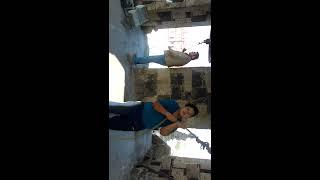 Repique de Campanas en la Basílica de  San Felipe Neri