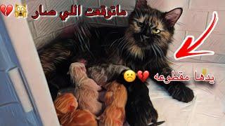 موت عيال قطوتي جيني 💔 وولاده مرزوقه 😱