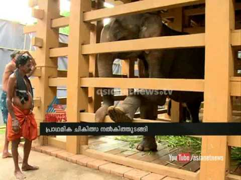 Injured wild elephant seen in Peppara getting well with expert health caring
