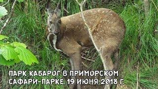 ПАРК КАБАРОГ В ПРИМОРСКОМ САФАРИ-ПАРКЕ. 19 ИЮНЯ 2018 Г.