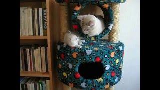 Тайский кот играет с сыном! Это надо видеть! Тайские кошки - это чудо! Funny Cats
