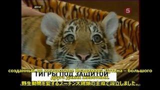 7月29日は「世界トラの日」です。2010年にサンクトペテルブルグで開かれ...