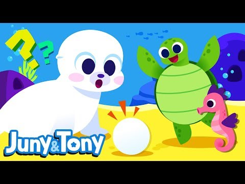 whose-egg-is-it?-|-animals-song-for-kids-|-seahorse,-lobster,-whale-and-sea-turtle-|-juny&tony