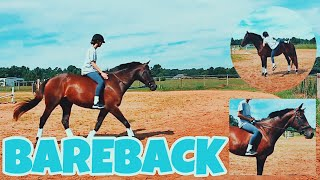 HOW TO BAREBACK (mounting, riding & jumping)