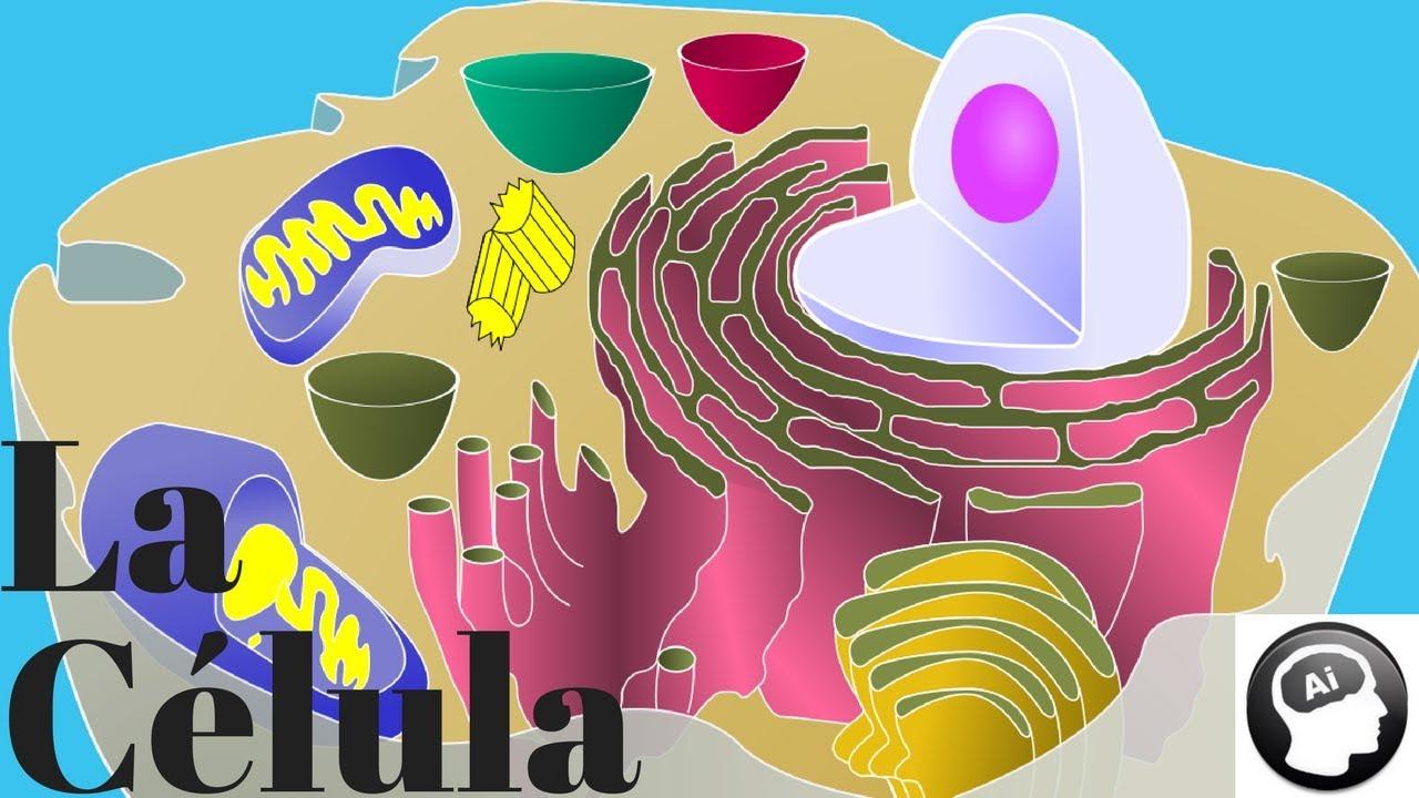 La Célula Organelos Celulares Estructura Y Función