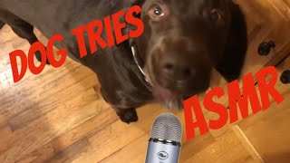 My Dog Tries ASMR For The First Time