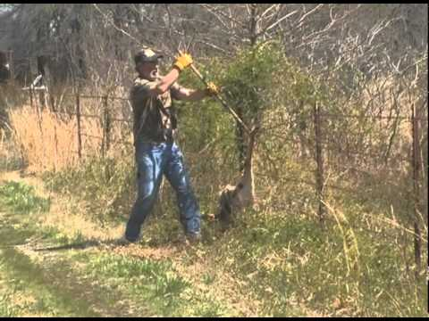 Deer Caught In Barb Wire Fence Youtube