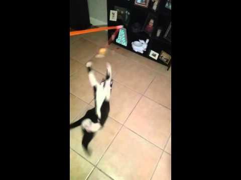 New Dollar Tree Cat Toys
