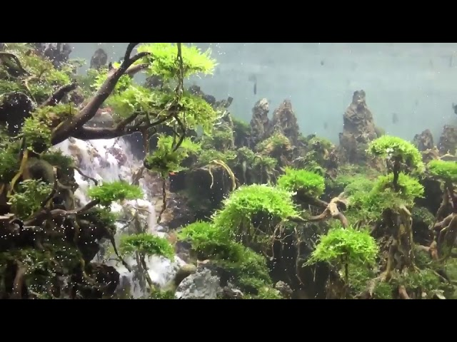 Artist Constructs Forest and Underwater Waterfall in Fish Tank – 989796