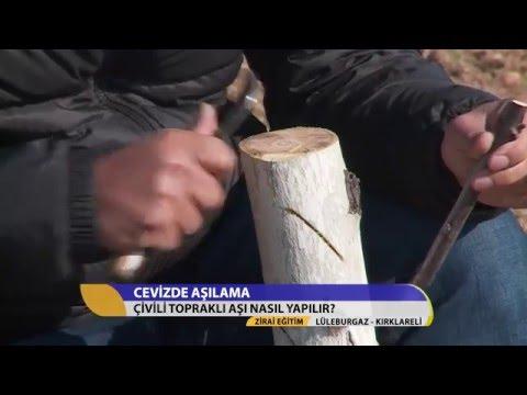 Zirai Eğitim/Cevizde Çivili