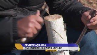 Download lagu Zirai Eğitim/Cevizde Çivili Topraklı Aşı Nasıl Yapılır?