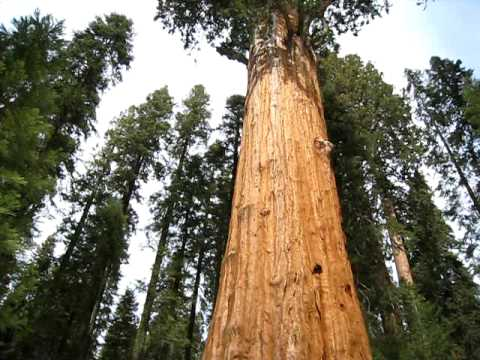 Sequoia National Park, General Sherman Tree