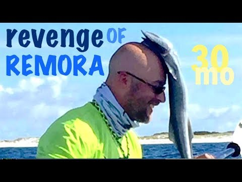 """Kayak Fishing Offshore with Line Cutterz Crew - """"REVENGE OF REMORA!"""" - Pensacola Florida"""
