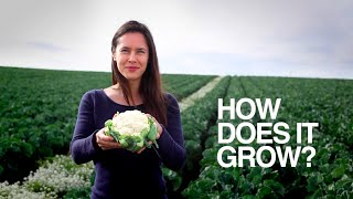 How Does it Grow? Cauliflower