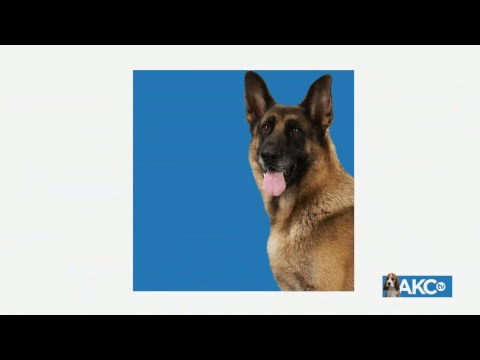 2018 AKC Royal Canin National AllBreed Puppy and Junior Stakes