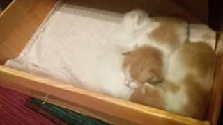 Отдаю даром котят!:) Писать Вк в лс