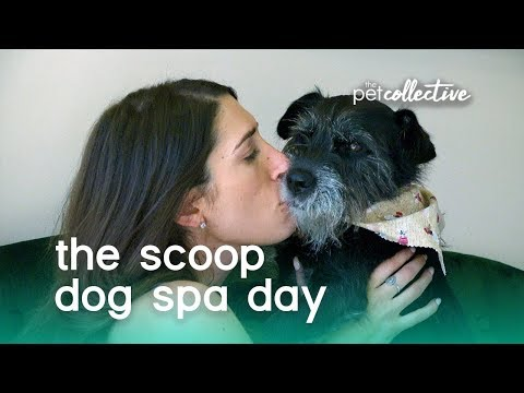 Dog Spa Day | The Scoop