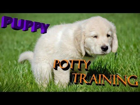 Puppy potty training in a Very easy way hindi / urdu 2017
